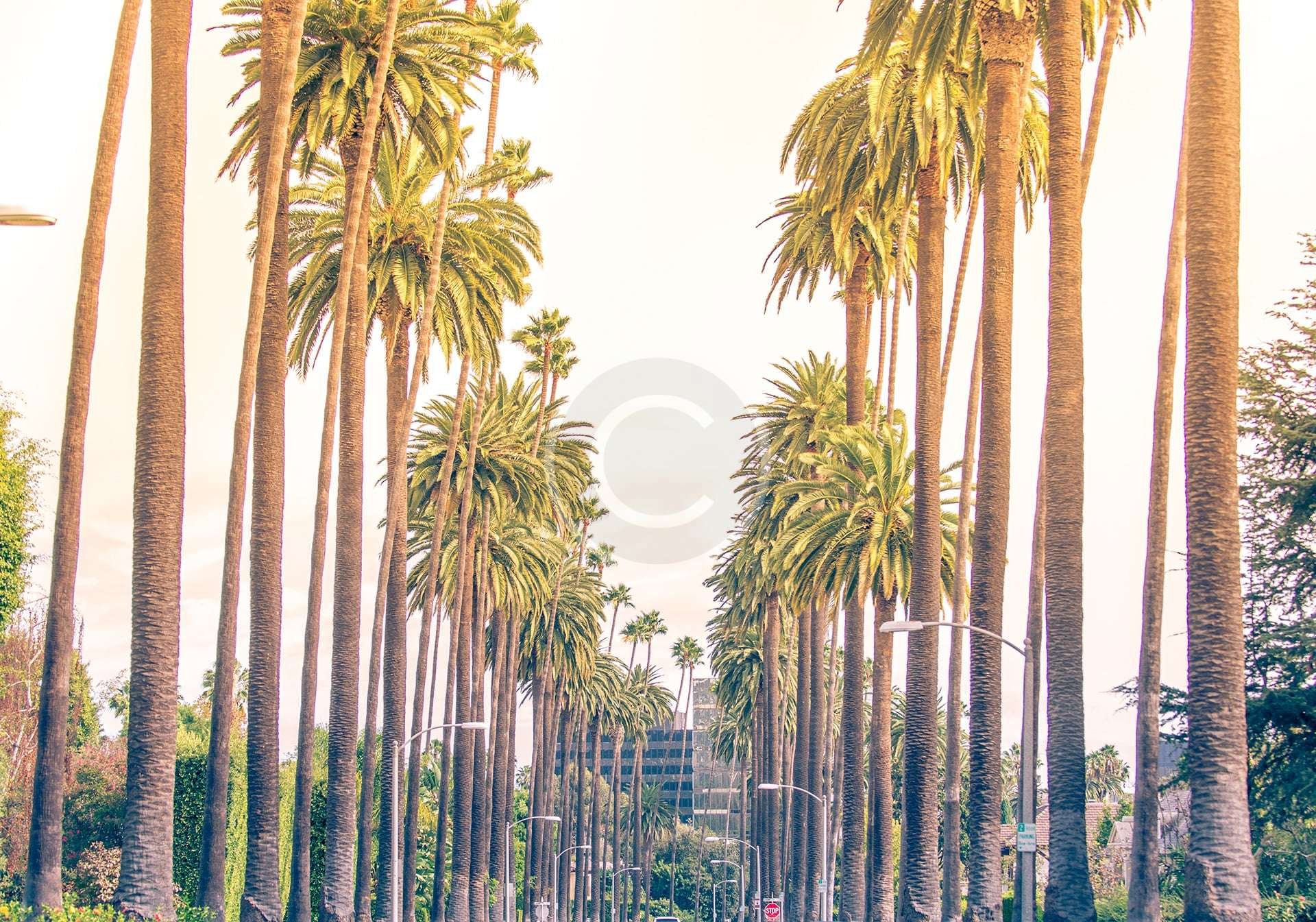 Santa Barbara Tour